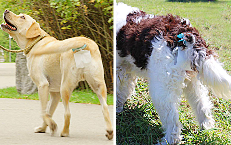 Piqapoo Dog Poop Collector   Attach a Pooper Scooper on Dog's Tail