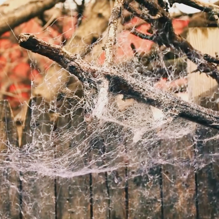 fake spider web spray