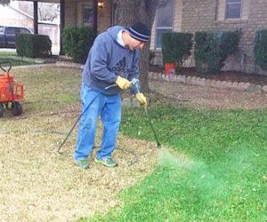 paint your grass green