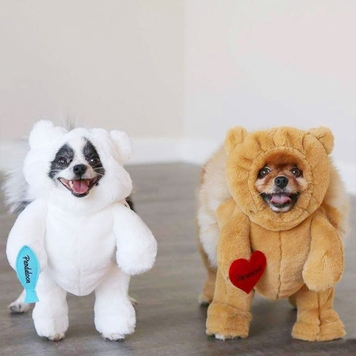 cute ideas for pet costumes