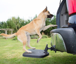 Best Dog Steps For SUV | Heininger Twistep