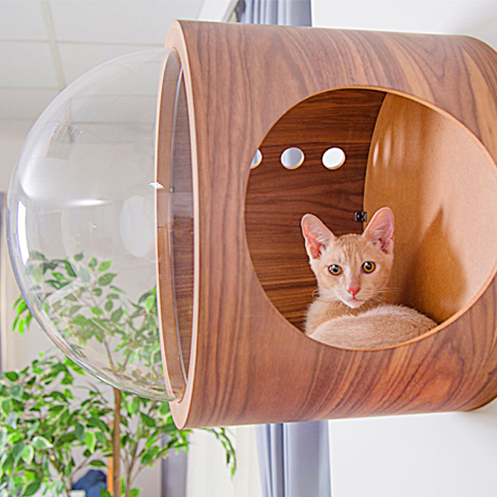 floating window cat bed