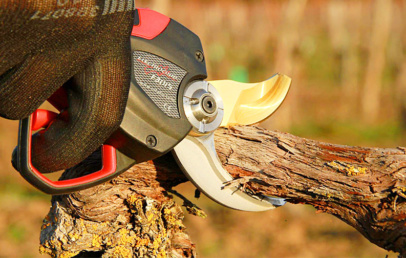 Best Electric Pruning Shears For Trees & Gardening