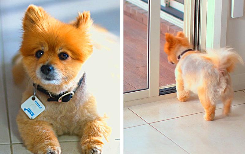 Best Automatic Dog Door   Smart Sliding Pet Door Kit