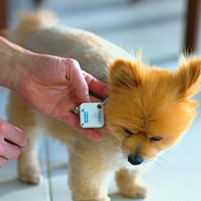 Smart Sliding Pet Door Kit