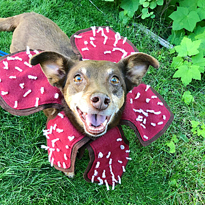 Demogorgon Dog Costume