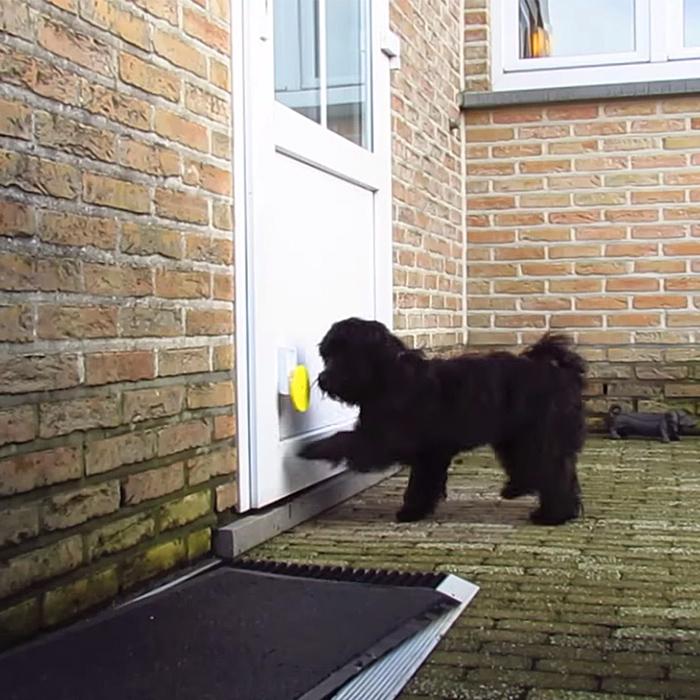 Pebble Smart Doggie Doorbell