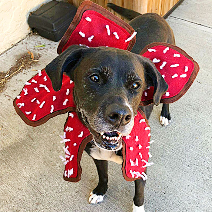 Stranger Things dog Costume