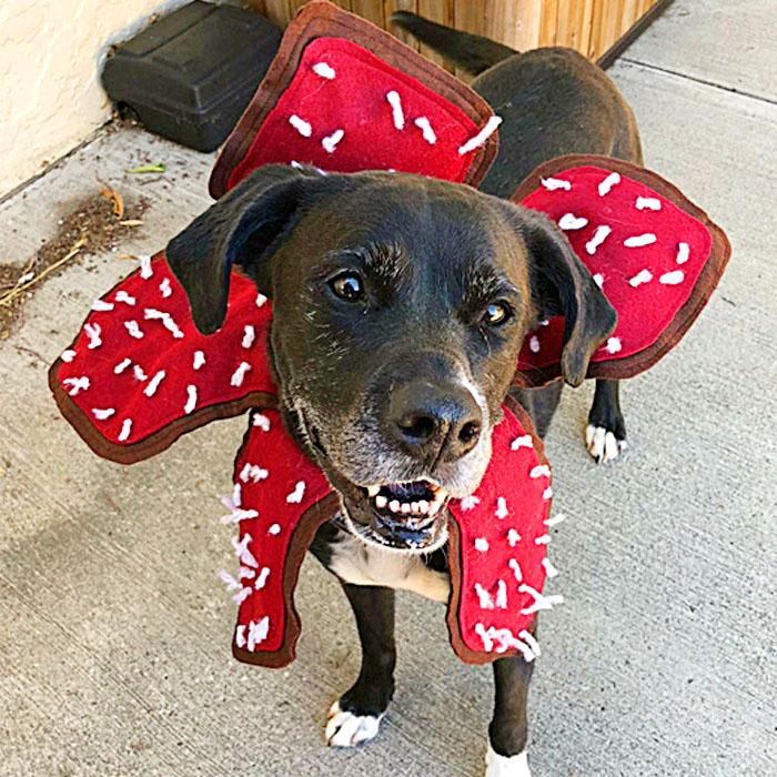 Stranger Things dog Costume