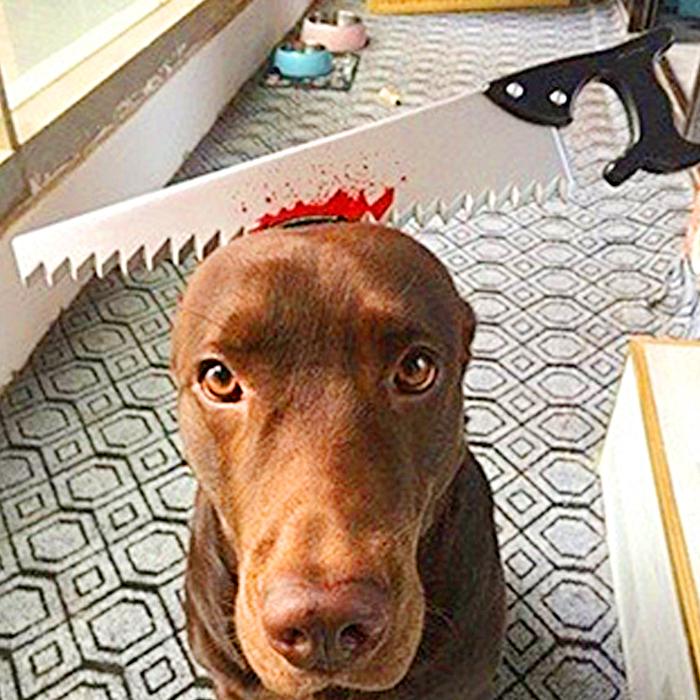Halloween Headbands For Pets