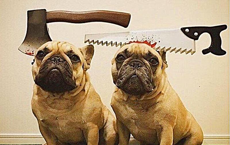 Realistic Halloween Headbands For Pets | Saw, Axe, Knife Headband
