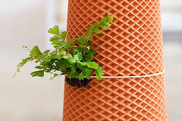Grow Plant Without Soil