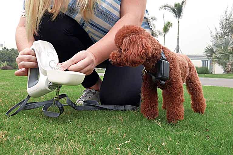 multi use Dog Leash